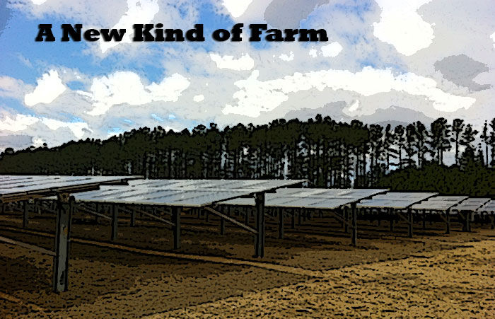 A Solar Farm in Cary