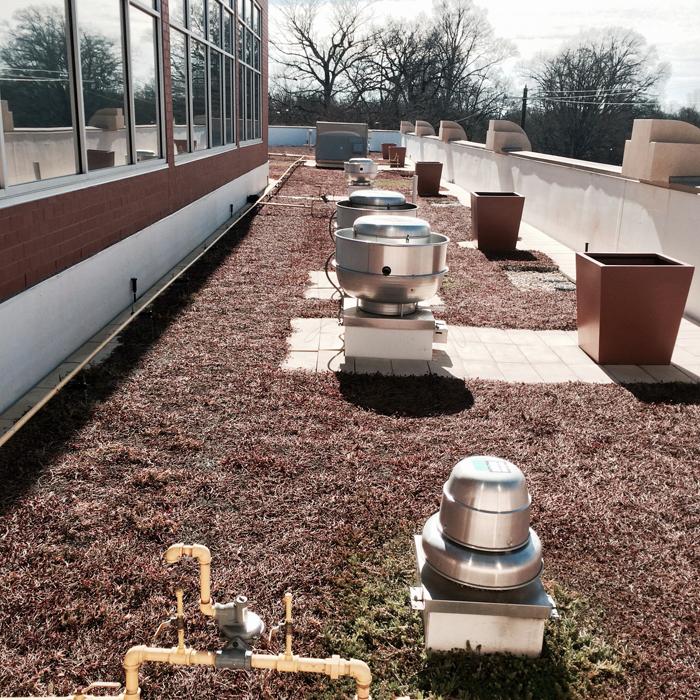 Green Roof on the Harris Teeter